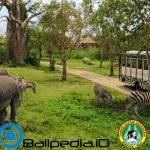 Bali Safari Park: Lokasi, Daya Tarik Wisata dan Harga Tiket Masuk