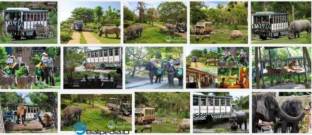 Foto Bali Safari And Marine Park