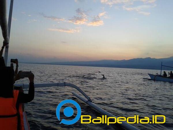 Lumba-Lumba Lovina Bali