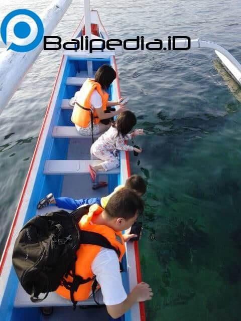 Dolphin di Lovina Bali
