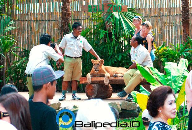 Animal Show Bali Zoo