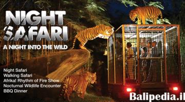 Harga Tiket Night Safari Bali 2019 – Intip Yuk!